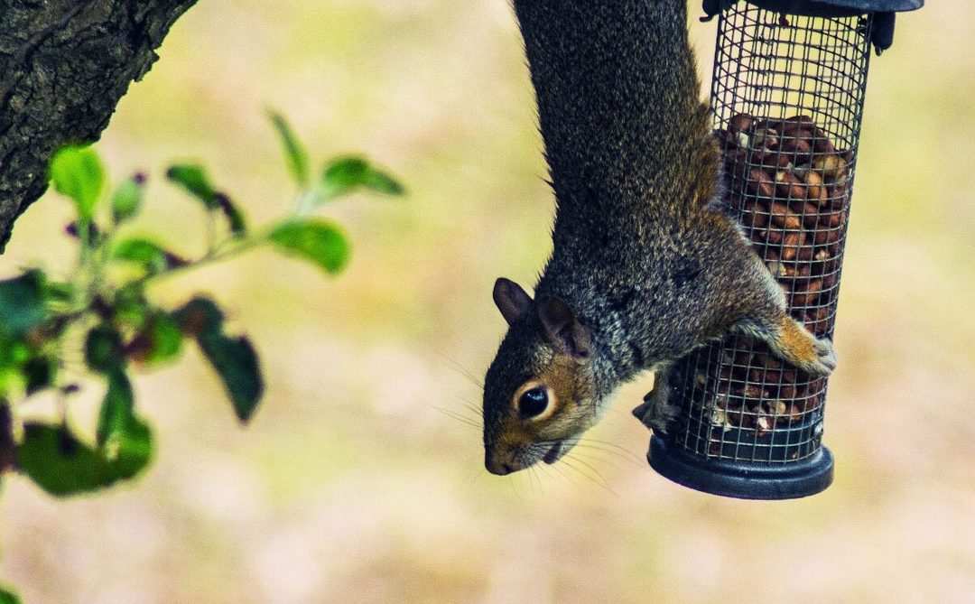 How to Whirl a Squirrel off of a Bird Feeder